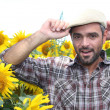 A farmer in a sunflowers field - Stock Photo