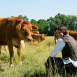 Farmer kneeling by cows in field - Stock Photo