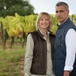 Couple in a vineyard — Stock Photo #8783947