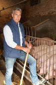 Farmer in a pig pen — Stock Photo