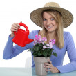 Stock Photo: Young womwatering potted plant