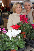 Mature ladies in open air market choosing plants — Stock Photo