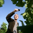 Man walking in a vineyard and testing wine - Stock Photo