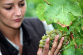 Woman stood by grape vine — Stock Photo
