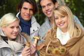 Two couples gathering mushrooms — Stock Photo