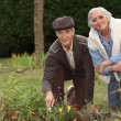 Stock Photo: A mature couple gardening