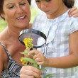 A 55 years old woman and a little looking a yellow flower with a magnifying — Stock Photo