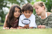 Children looking at insects — Stockfoto