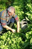 Man working in his garden — Stock Photo