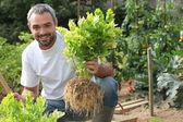 Man in vegetable garden — Stock Photo