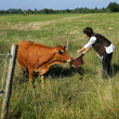 Stock Photo: Farmer feeding cow in field