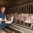 Mwith pigs and laptop — Stock Photo #8972574