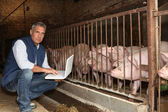Man with pigs and a laptop — Stock Photo