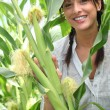 Beautiful young woman in a sweetcorn field — Stock Photo #9043646