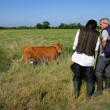 Farming couple in a field with a cow — Stock Photo