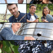 Images of the wine industry — Stock Photo