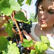 Woman working in a vineyard — Stock Photo #9045461