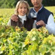 Couple in the vines, man holding a red wine glass — Stock Photo #9047245
