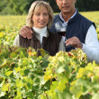 Stock Photo: Couple in vines, mholding red wine glass