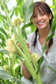 Beautiful young woman in a sweetcorn field — Stock Photo