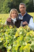 Couple in the vines, man holding a red wine glass — Stock Photo
