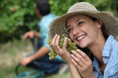 Woman during a grape harvest — Stock Photo