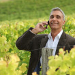 Royalty-Free Stock Photo: A mature man over the phone in a vineyard.