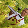 Waiter serving glasses of wine in vineyard — Stock Photo #9061925