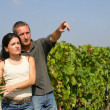 Young couple in a vineyard - Stock Photo
