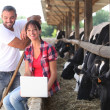 Royalty-Free Stock Photo: Farming couple stood by cows