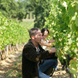 Couple working in their vineyard — Stock Photo