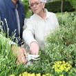 Young man gardening with older woman — Stock Photo #9167740