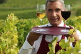 Sommelier with a glass each of red and white wines in a vineyard — Stock Photo
