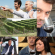 Collage of winemakers, wine and vineyards — Stok fotoğraf
