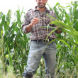Stock Photo: Farmer standing in cornfield