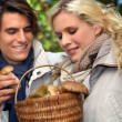 Stock Photo: Couple gathering mushrooms in forest
