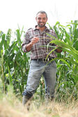 Farmer standing in a cornfield — Stock Photo
