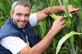 Farmer kneeling by crop — Stock Photo