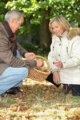 Senior man and senior woman collecting chestnuts — Stock Photo