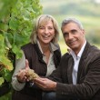 Vineyard owners holding a bunch of grapes — Stock Photo #9198459