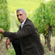 Man crouching down in a vineyard - Stock Photo