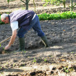 Stock Photo: Man hoeing in his garden