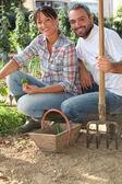 Couple working in a kitchen garden — Stock Photo