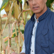 Stock Photo: Farmer holding maize ear