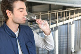 Male wine producer — Stock Photo