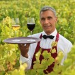 Sommelier in a vineyard - Stock Photo