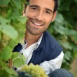 Portrait of a man with grapes — Stock Photo