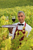 Sommelier in a vineyard — Stock Photo
