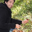 Man picking mushrooms - Stock Photo