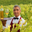 Wine waiter in the middle of vineyards — Stock Photo
